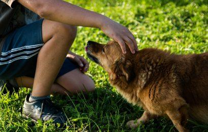 Confcommercio Milano per la prima Pet Week