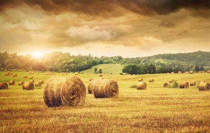 Rolfi: su comparto agricolo misure troppo deboli, Governo ascolti territori