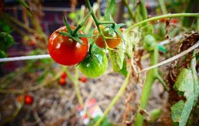 "PSR 2014-2020 (FEASR): bando 2020, Misura 11 ""Agricoltura biologica"""